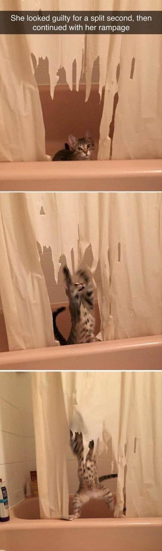 Cat - She looked guilty for a split second, then continued with her rampage