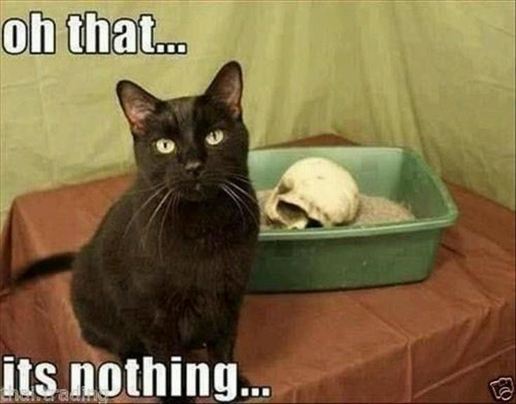 Cat - oh that. its nothing..