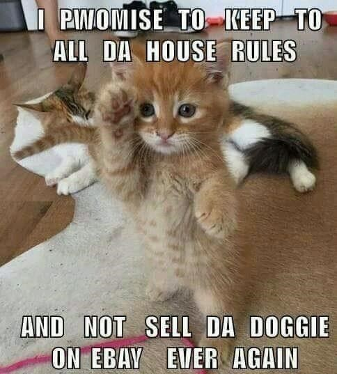 Cat - I PIWOMISE TO KEEP TO ALL DA HOUSE RULES AND NOT SELL DA DOGGIE ON EBAY EVER AGAIN