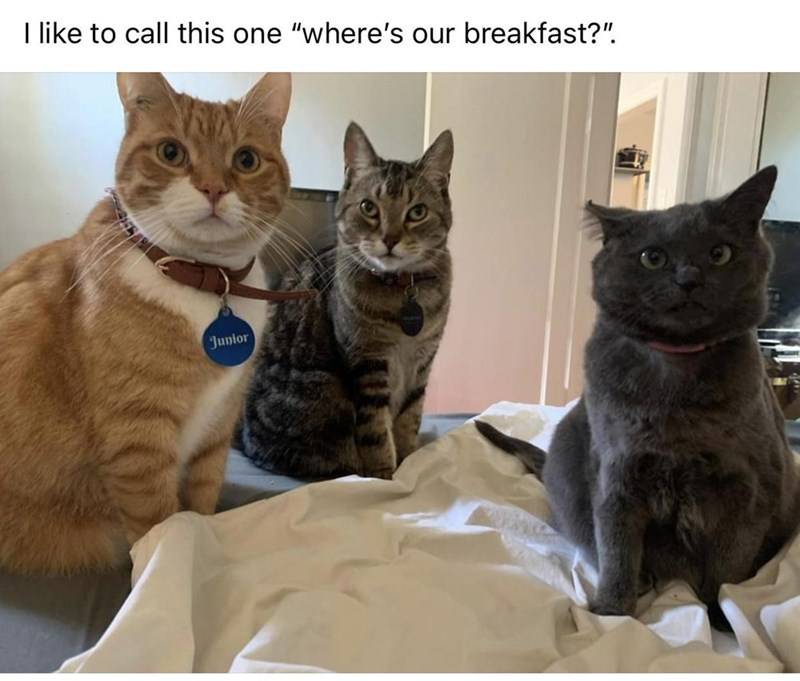 """Cat - I like to call this one """"where's our breakfast?"""". Junior"""