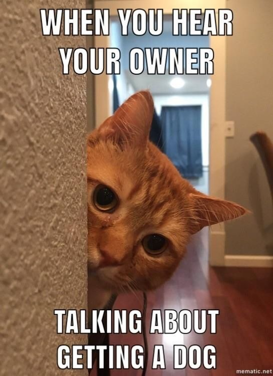Cat - WHEN YOU HEAR YOUR OWNER TALKING ABOUT GETTING A DOG mematic.net
