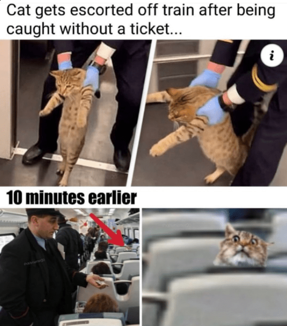 Photo caption - Cat gets escorted off train after being caught without a ticket... i 10 minutes earlier