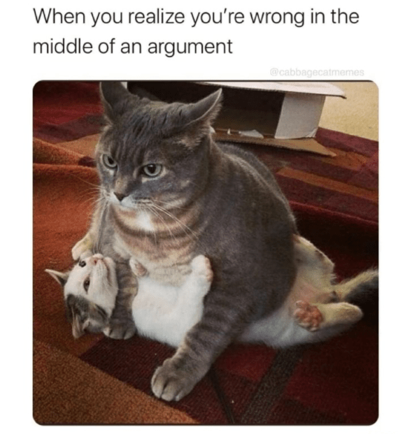 Cat - When you realize you're wrong in the middle of an argument @cabbagecatmemes