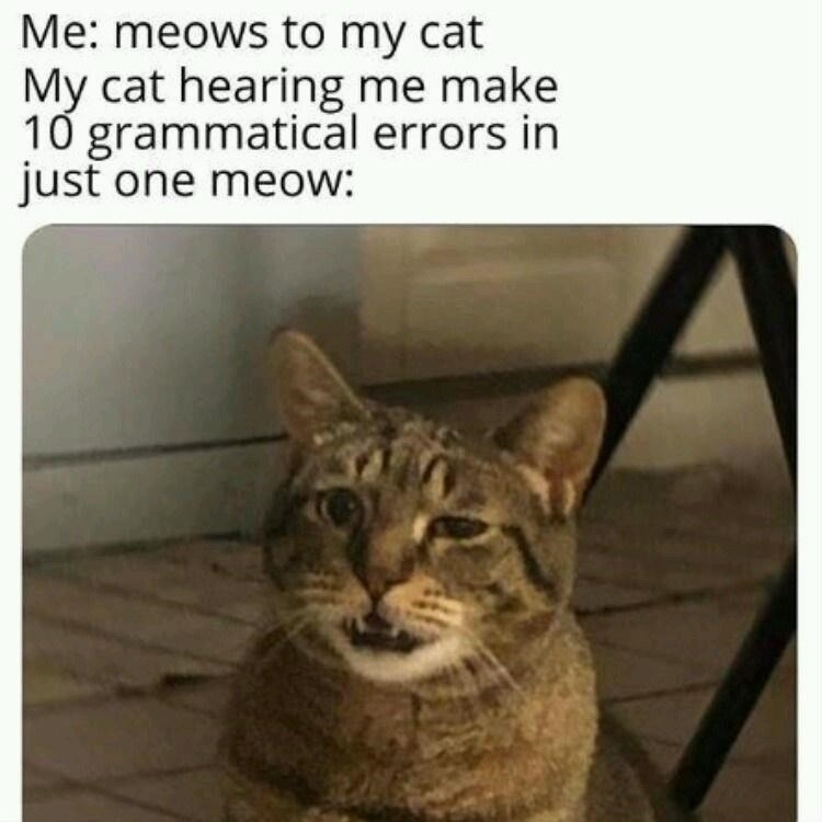 Cat - Me: meows to my cat My cat hearing me make 10 grammatical errors in just one meow: