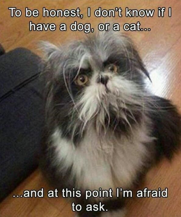 Cat - To be honest, I don't know if I have a dog, or a cat... ...and at this point l'm afraid to ask.