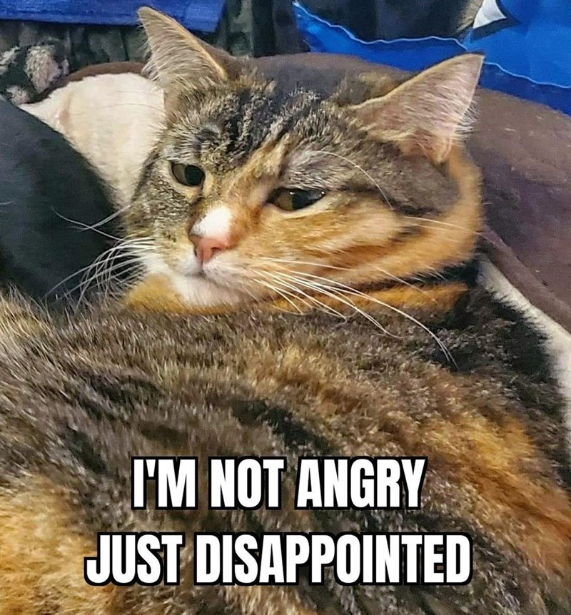 Cat - I'M NOT ANGRY JUST DISAPPOINTED