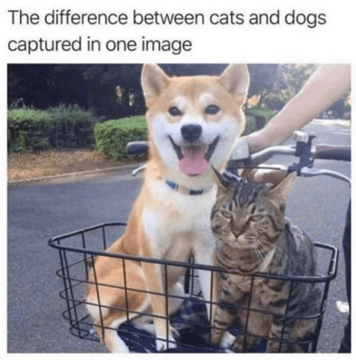 Mammal - The difference between cats and dogs captured in one image