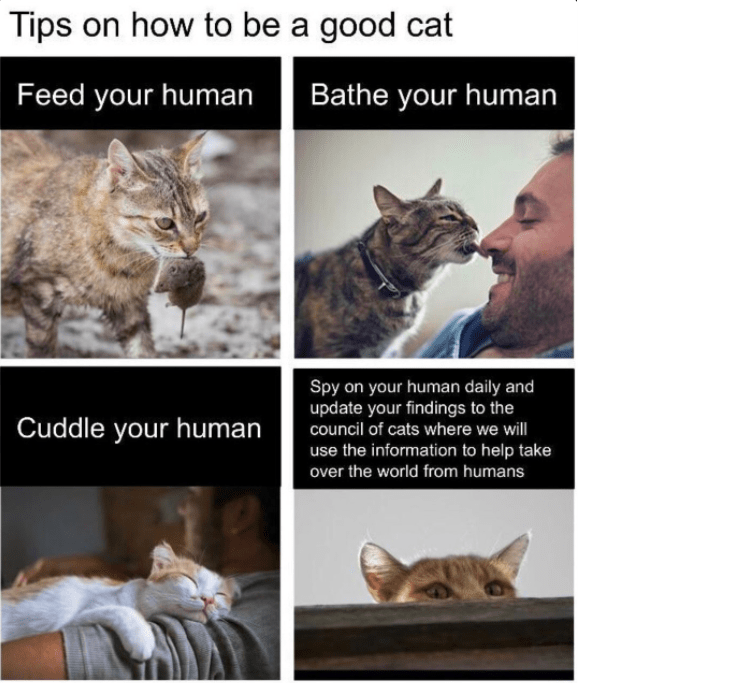 Cat - Tips on how to be a good cat Feed your human Bathe your human Spy on your human daily and update your findings to the council of cats where we will Cuddle your human use the information to help take over the world from humans