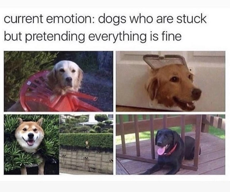 funny memes, doggo memes, relatable memes | current emotion: dogs who are stuck but pretending everything is fine