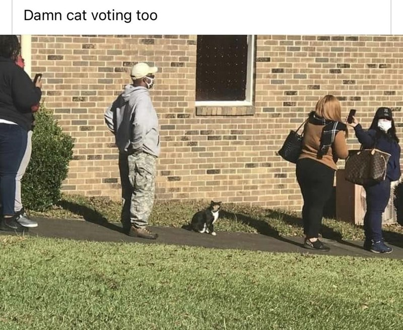 Dog - Damn cat voting too