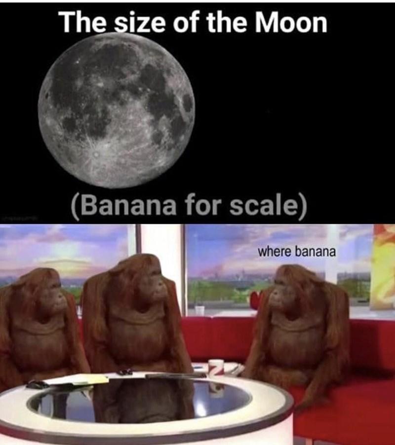 Adaptation - The size of the Moon (Banana for scale) where banana
