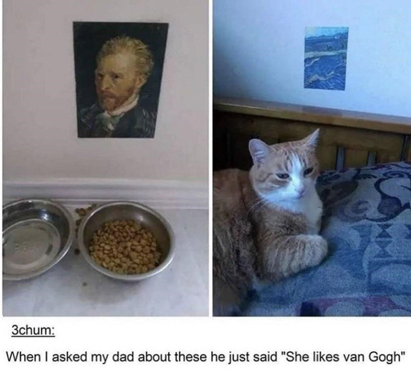 """Cat - 3chum: When I asked my dad about these he just said """"She likes van Gogh"""""""