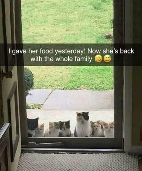 Text - I gave her food yesterday! Now she's back with the whole family