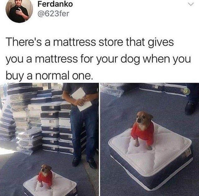 Photo caption - Ferdanko @623fer There's a mattress store that gives you a mattress for your dog when you buy a normal one.