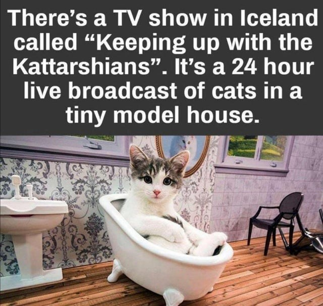 """Cat - There's a TV show in Iceland called """"Keeping up with the Kattarshians"""". It's a 24 hour live broadcast of cats in a tiny model house."""