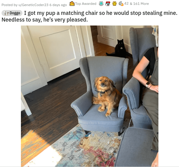 Product - Posted by u/GeneticCoder23 6 days ago Top Awarded 42 & 161 More Doggo I got my pup a matching chair so he would stop stealing mine. Needless to say, he's very pleased.