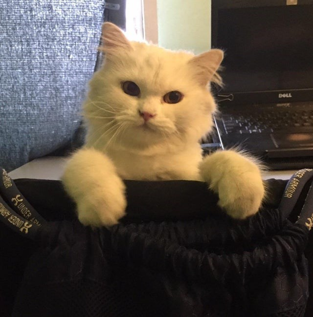 Cat - UNDER ARM DOLL ER ARMOUR KUNDER ARM