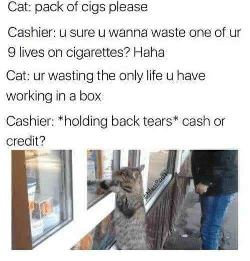 Text - Cat: pack of cigs please Cashier: u sure u wanna waste one of ur 9 lives on cigarettes? Haha Cat: ur wasting the only life u have working in a box Cashier: *holding back tears* cash or credit?