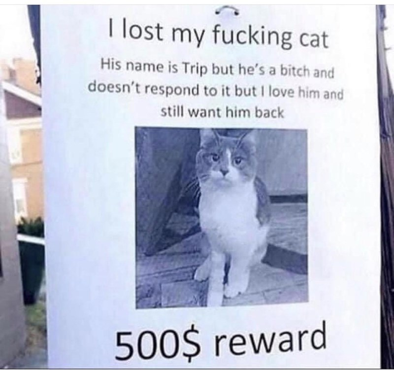 Cat - I lost my fucking cat His name is Trip but he's a bitch and doesn't respond to it but I love him and still want him back 500$ reward