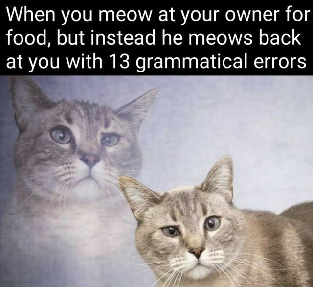 Cat - When you meow at your owner for food, but instead he meows back at you with 13 grammatical errors
