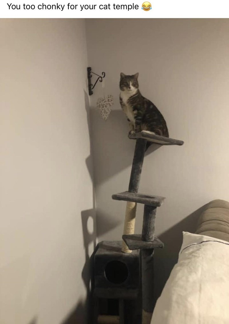 Cat - You too chonky for your cat temple