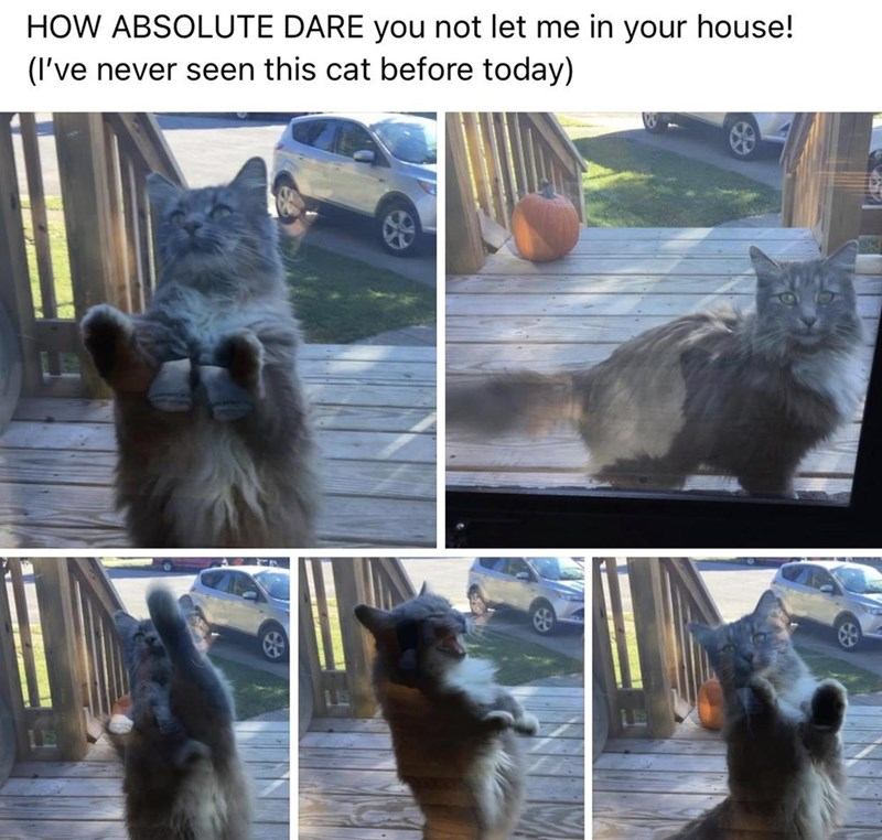 Adaptation - HOW ABSOLUTE DARE you not let me in your house! (I've never seen this cat before today)