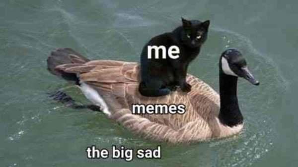 Bird - me memes the big sad