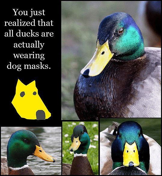 Bird - You just realized that all ducks are actually wearing dog masks.