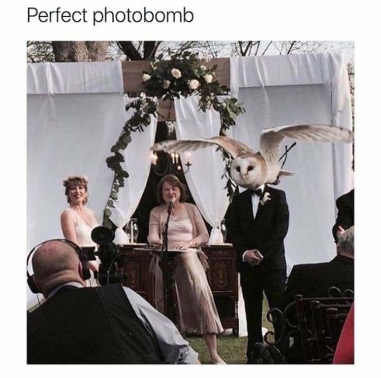 Photograph - Perfect photobomb