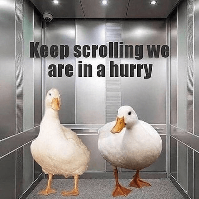 Bird - Keep scrolling we are in a hurry