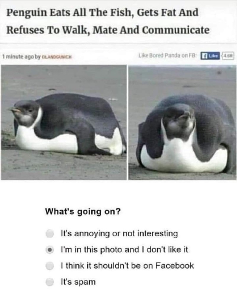 Text - Penguin Eats All The Fish, Gets Fat And Refuses To Walk, Mate And Communicate 1 minute ago by oLANDGUNCH Like Bored Panda on FB: Like4M What's going on? It's annoying or not interesting I'm in this photo and I don't like it I think it shouldn't be on Facebook It's spam