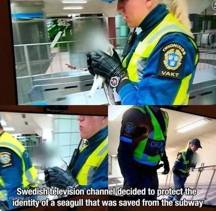 Helmet - CRONING VAKT ORN Swedish television channel decided to protect the identity of a seagull that was saved from the subway rouming.cz