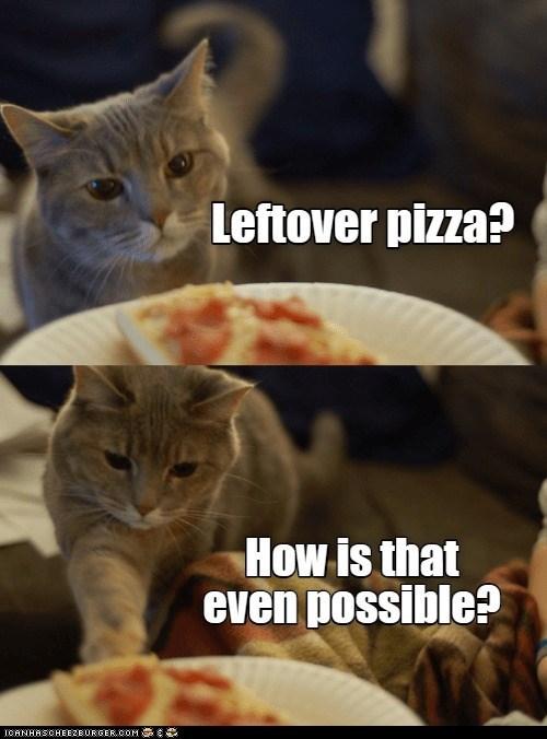Cat - Leftover pizza? How is that even possible? ICANHASCHEEZBURGER.COM