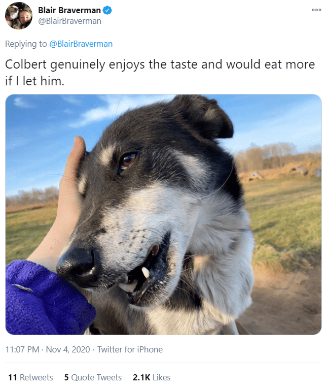 Vertebrate - Blair Braverman @BlairBraverman 000 Replying to @BlairBraverman Colbert genuinely enjoys the taste and would eat more if I let him. 11:07 PM · Nov 4, 2020 · Twitter for iPhone 11 Retweets 5 Quote Tweets 2.1K Likes