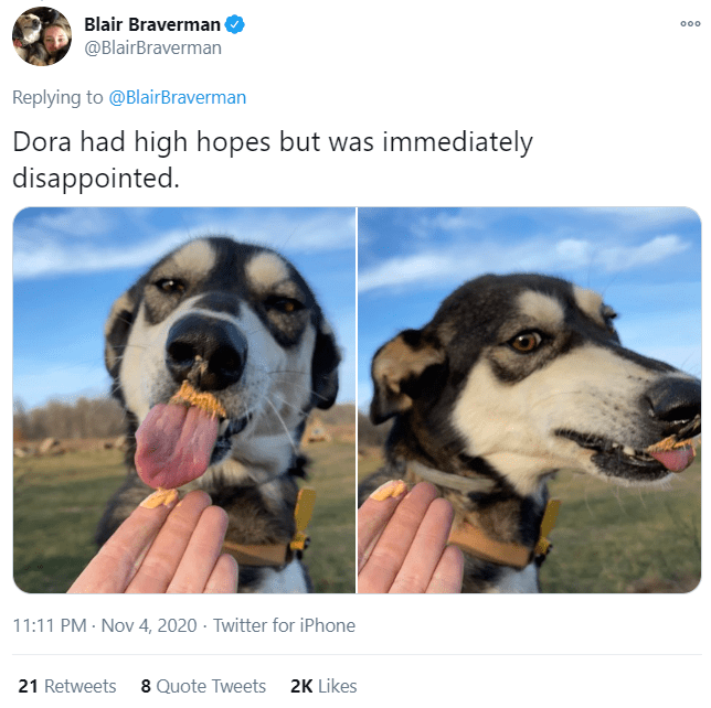 Dog - Blair Braverman @BlairBraverman 000 Replying to @BlairBraverman Dora had high hopes but was immediately disappointed. 11:11 PM · Nov 4, 2020 · Twitter for iPhone 21 Retweets 8 Quote Tweets 2K Likes