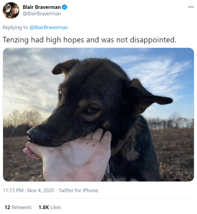 Dog - Blair Braverman @BlairBraverman 000 Replying to @BlairBraverman Tenzing had high hopes and was not disappointed. 11:13 PM - Nov 4, 2020 · Twitter for iPhone 12 Retweets 1.8K Likes