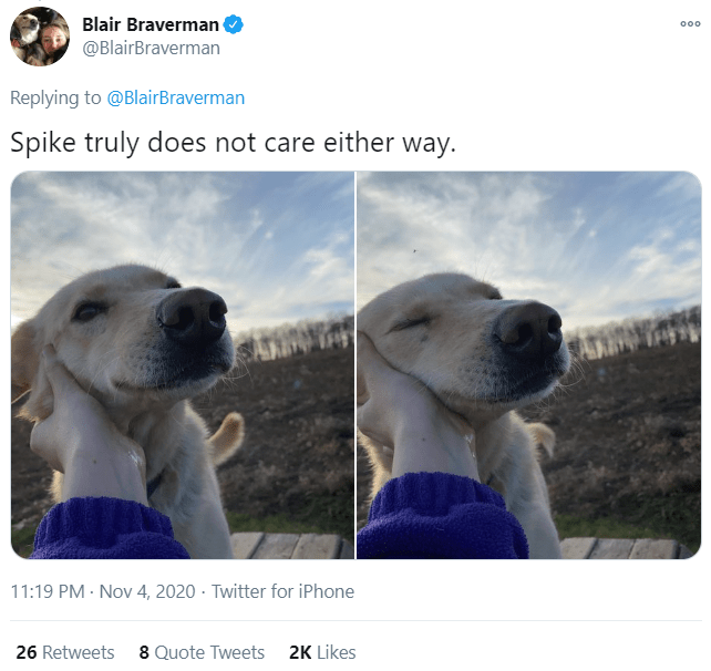 Vertebrate - Blair Braverman @BlairBraverman 000 Replying to @BlairBraverman Spike truly does not care either way. 11:19 PM - Nov 4, 2020 · Twitter for iPhone 26 Retweets 8 Quote Tweets 2K Likes