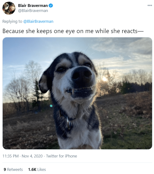 Dog breed - Blair Braverman 000 @BlairBraverman Replying to @BlairBraverman Because she keeps one eye on me while she reacts- 11:35 PM · Nov 4, 2020 · Twitter for iPhone 9 Retweets 1.6K Likes