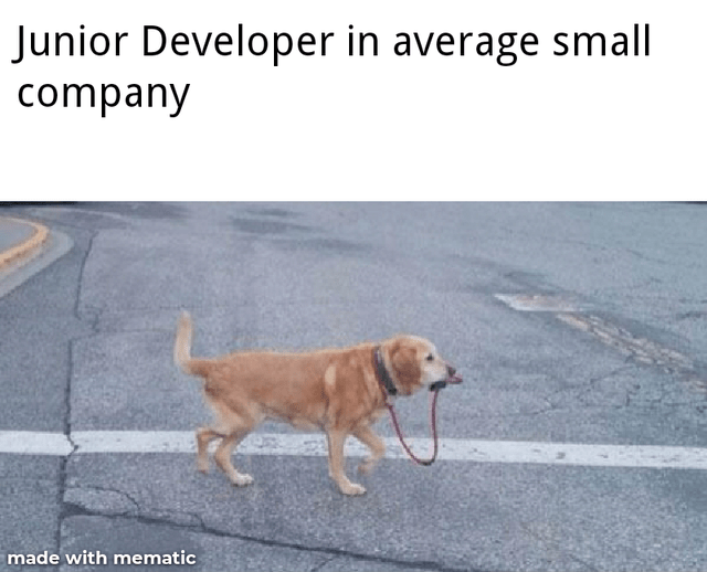 Dog - Junior Developer in average small company made with mematic