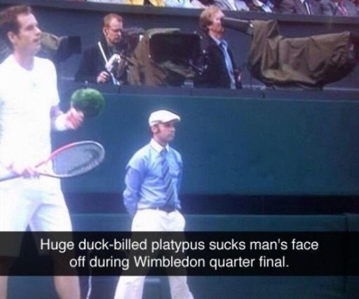 Tennis - Huge duck-billed platypus sucks man's face off during Wimbledon quarter final.