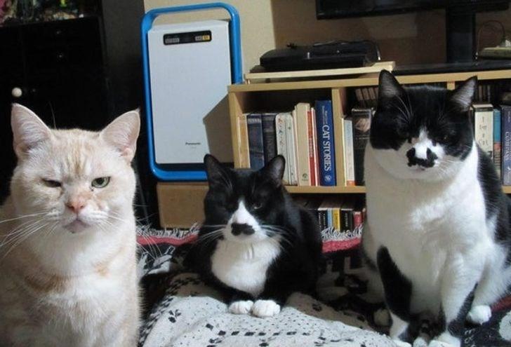 Cat - COMPAS CAT STORIES9