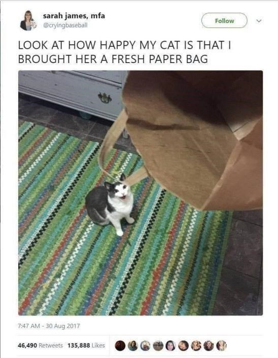 Photo caption - sarah james, mfa @cryingbaseball Follow LOOK AT HOW HAPPY MY CAT IS THAT I BROUGHT HER A FRESH PAPER BAG 7:47 AM - 30 Aug 2017 46,490 Retweets 135,888 Likes