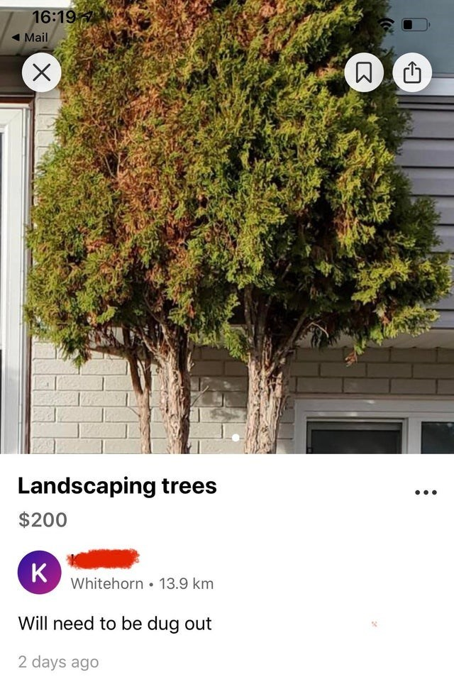 Tree - 16:19 Mail Landscaping trees ... $200 K Whitehorn • 13.9 km Will need to be dug out 2 days ago