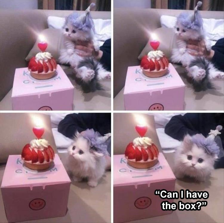 """cute pics of a fluffy kitten in a party hat celebrating with a small strawberry cake with a single candle on top """"Can I have the box?"""""""