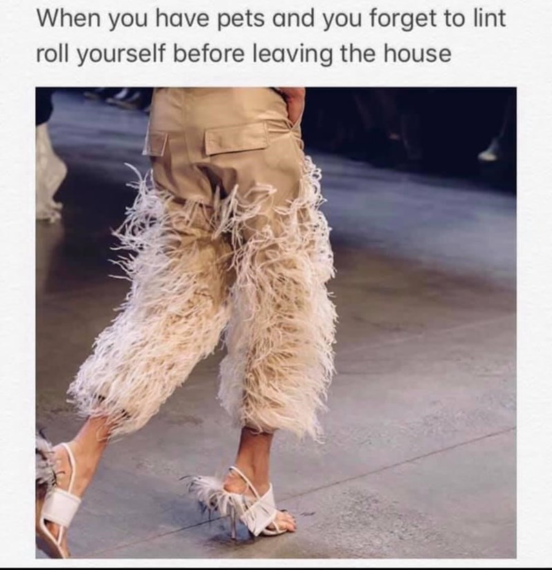 Clothing - When you have pets and you forget to lint roll yourself before leaving the house