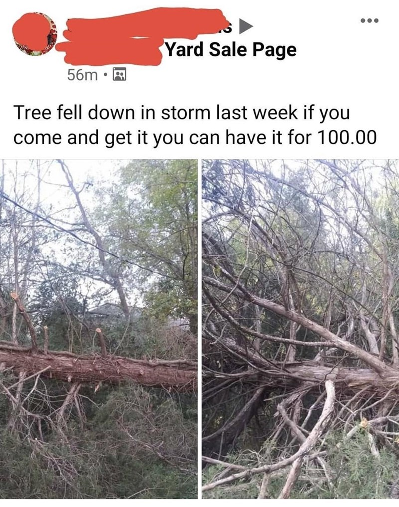 Tree - Yard Sale Page 56m Tree fell down in storm last week if you come and get it you can have it for 100.00