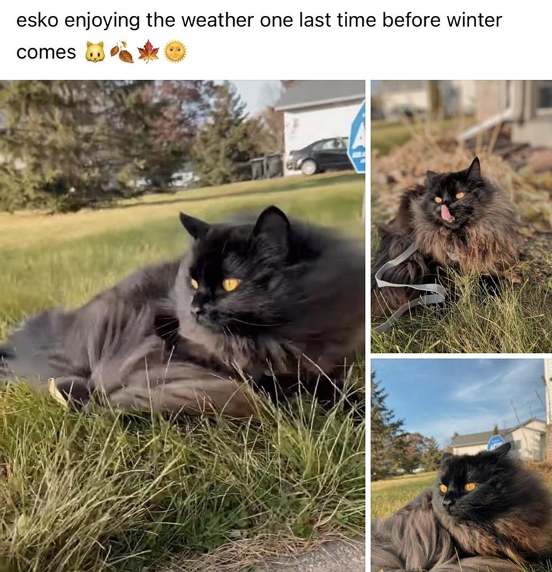 Cat - esko enjoying the weather one last time before winter comes