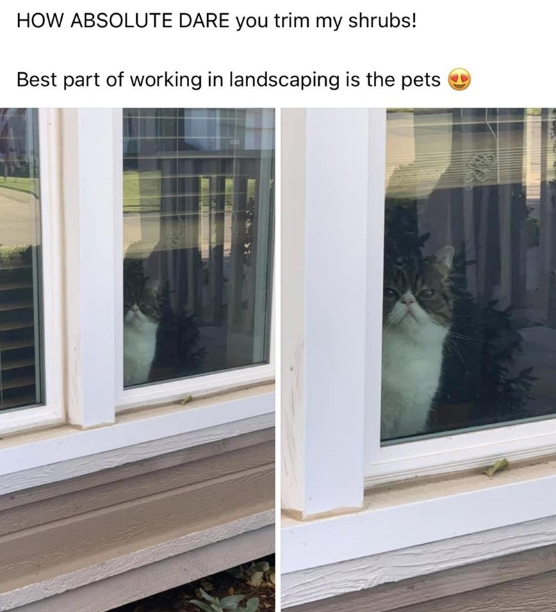 Window - HOW ABSOLUTE DARE you trim my shrubs! Best part of working in landscaping is the pets O