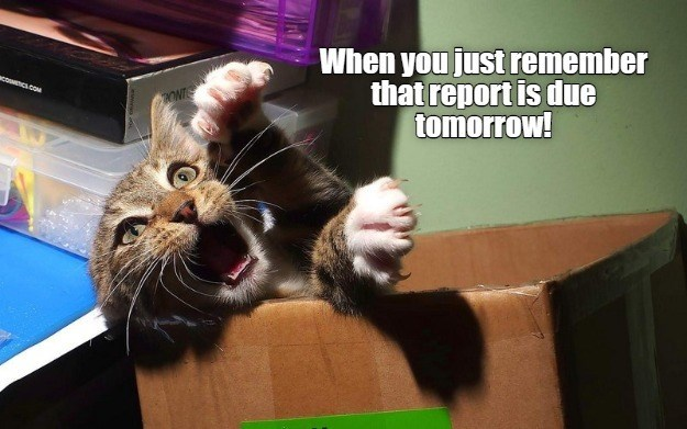 When you just remember that report is due tomorrow! cat freaking out inside a cardboard box