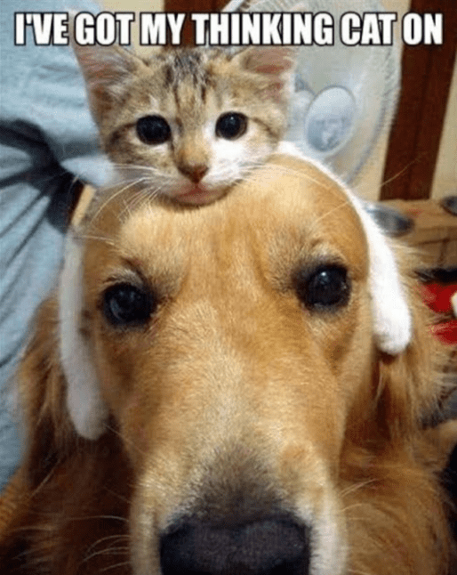 Mammal - IVE GOT MY THINKING CAT ON